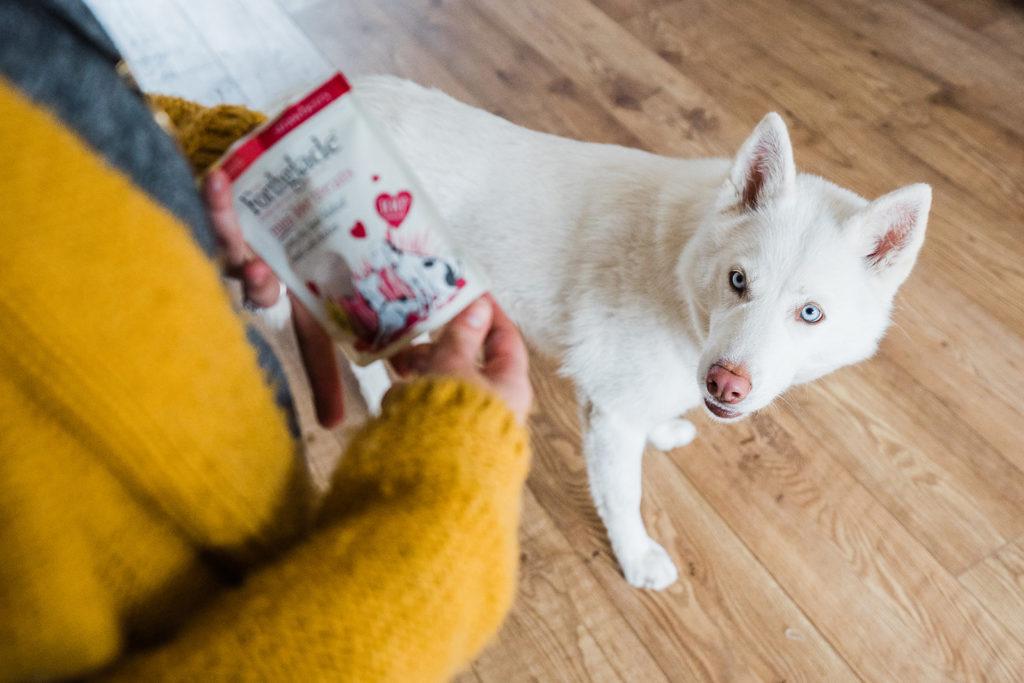 Elle Kenzie 3 My Doggo